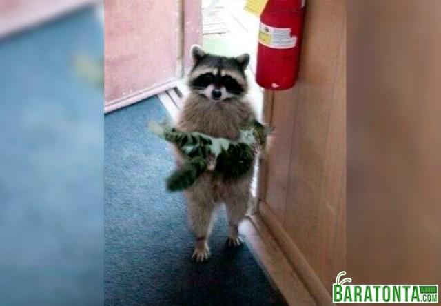 Senhor, desculpe incomodá-lo, mas esse gato é seu?