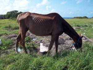 abandonedracehorse