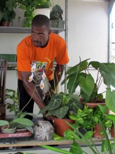 Calypsonian Popsicle tending to some of his plants today.