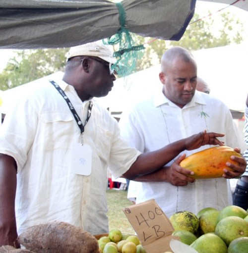 Acting Prime Minister Richard Sealy (left) inspecting this pawpaw with the help of Barbados Agriculture Society CEO James Paul.