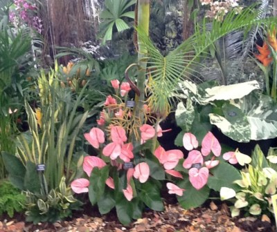 A section of the Gully Adventure display at the Chelsea Flower Show.