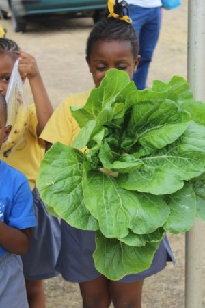 Christianne White showing off a big green leafy Chinese cabbage from the school garden.