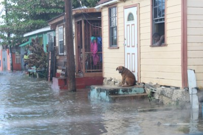 This dog on Chapman Lane takes position on a front step to escape the rising water.