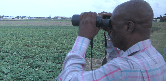 Charles Crawford keeps a watchful eye on this field potatoes to keep thieves at bay.
