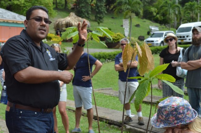 Dr Darin Sukha demonstrating aspects of cocoa cultivation.