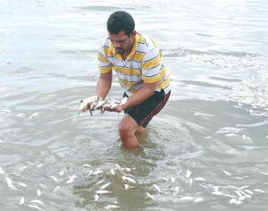Naresh Persad shows some of the dead fish that continue to wash up in the area of Mosquito Creek, La Romaine.
