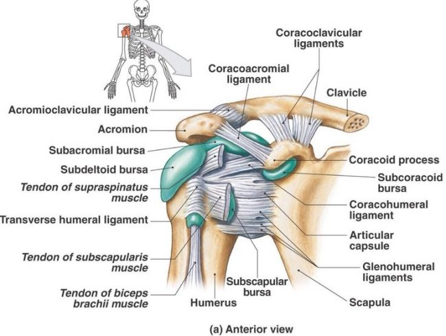Dealing With Shoulder Pain Barbados Today