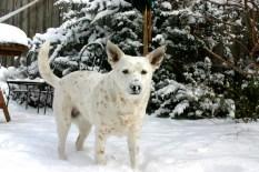 Snow Monster!
