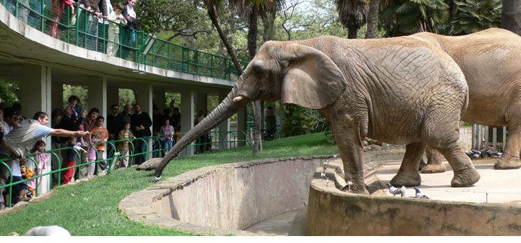 Zoo bcn descuentos