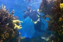 duiker in aquarium in barcelona