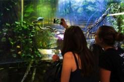meisjes maken foto van dieren in aquarium in barcelona