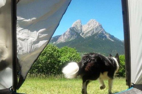 camping pedraforca hond tent