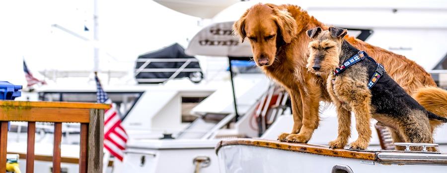 cani in barca