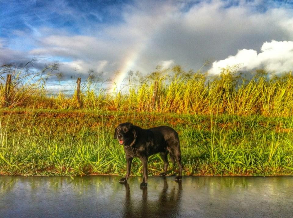 Lexi under the rainbow on her 13th birthday