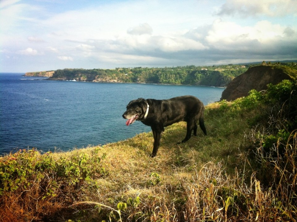 Lexi Dogg cliff walking