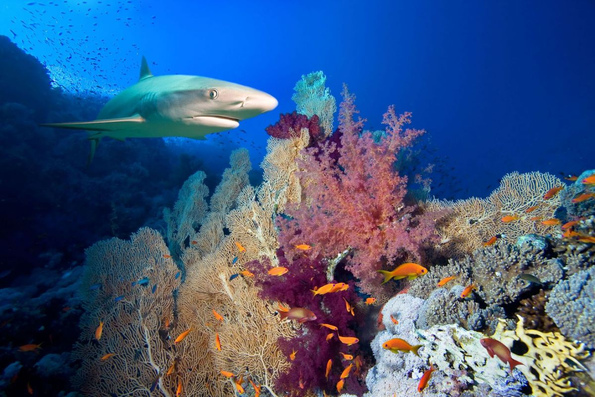 South Sulawesi Shark and Coral