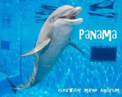 Panama the dolphin_small