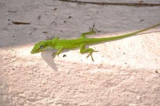 my little green friend_small