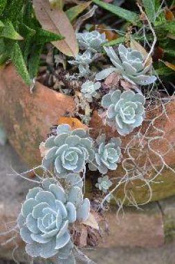 succulents_small