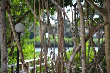 looking through the mangroves to the backdocks_small