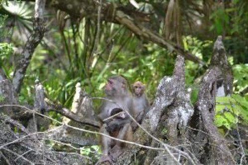 baby monkey_small