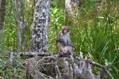 monkey sitting_small
