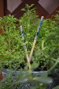 I love chopsticks in plants_small
