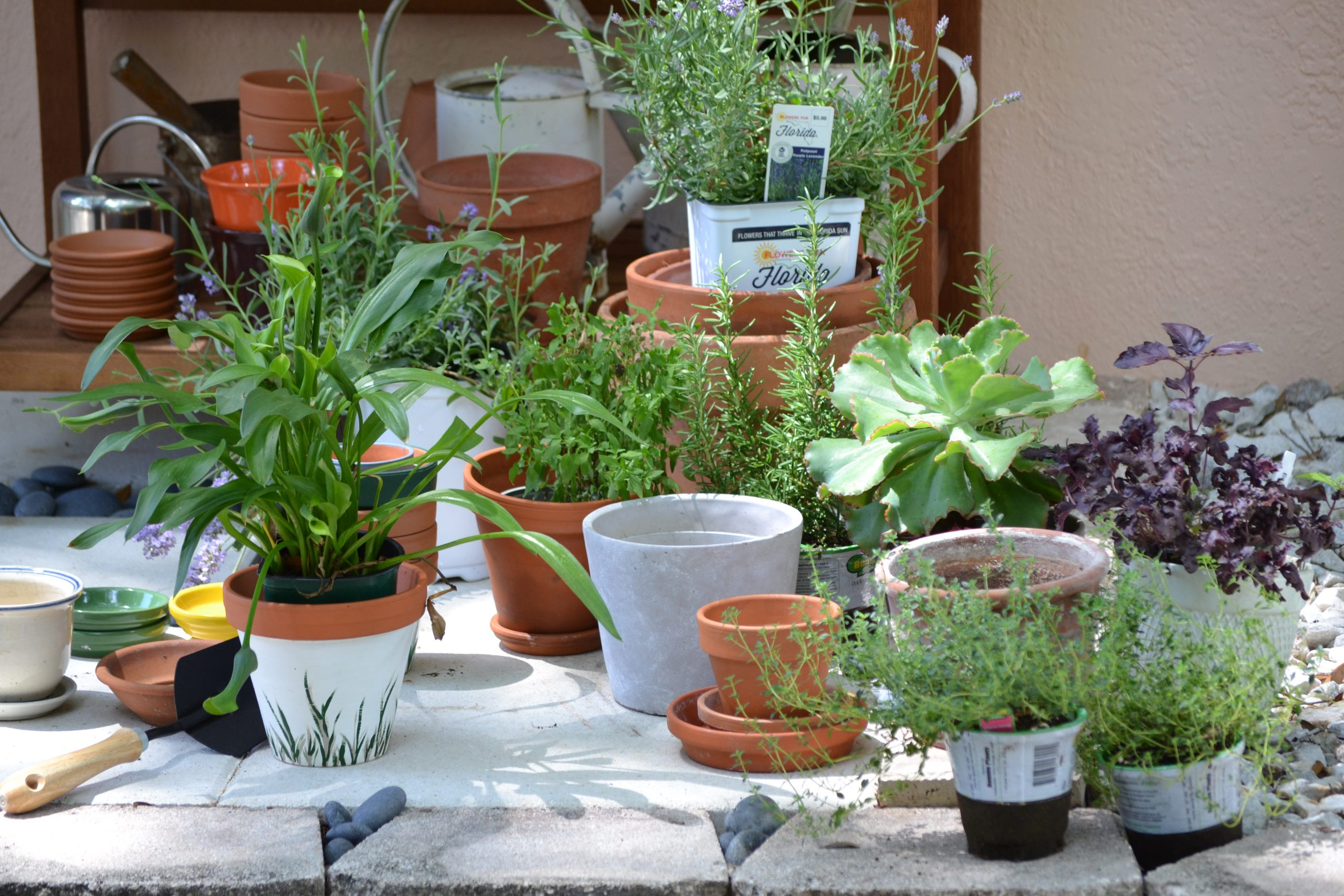 Potting Bench Gifts of Herbs, Flowers, and Food