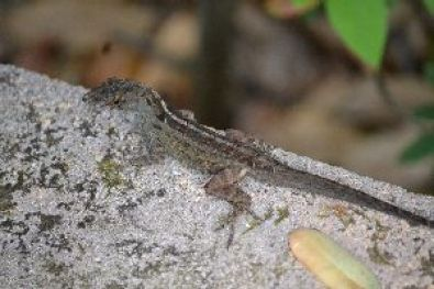 cute lizard break_small