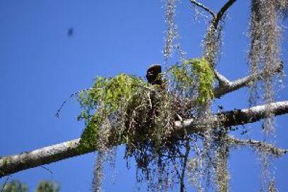 bird in tree_small