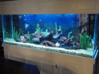 beautiful fish tank_small