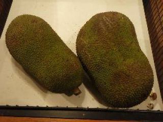 we love jackfruit_small