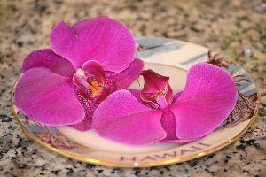 Hawaiian orchids_small