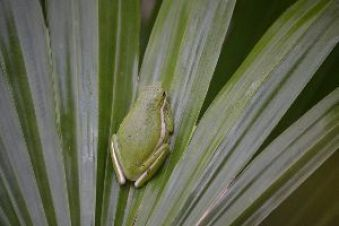 cute sticky frog_small