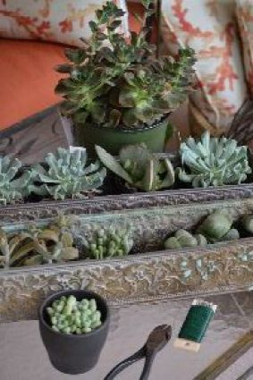 succulents for my new wreaths_small