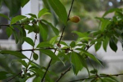 Julie's New Herb Garden – BarefootInFloridaWithJulie com