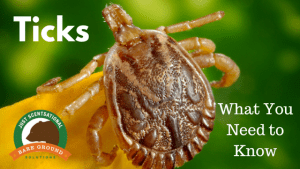 Ticks_ What You Need to Know