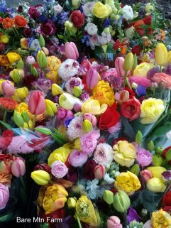 Spring flower bunches