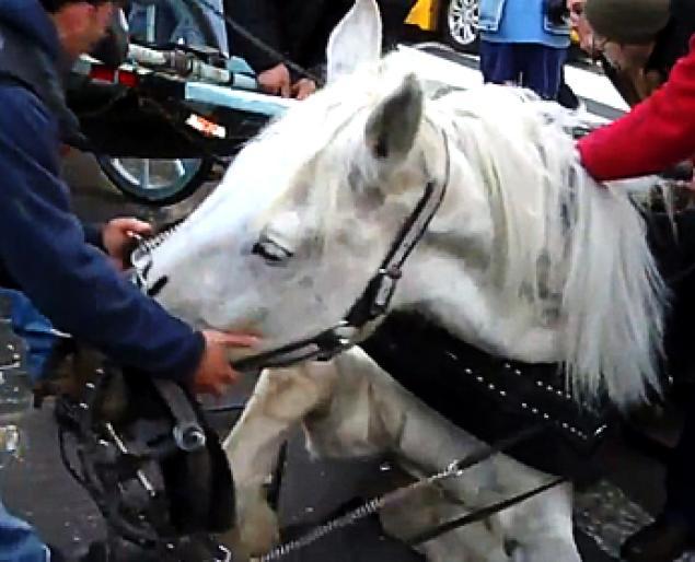 horse5n-2-web