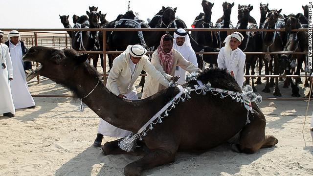 130306180342-camel-3-horizontal-gallery