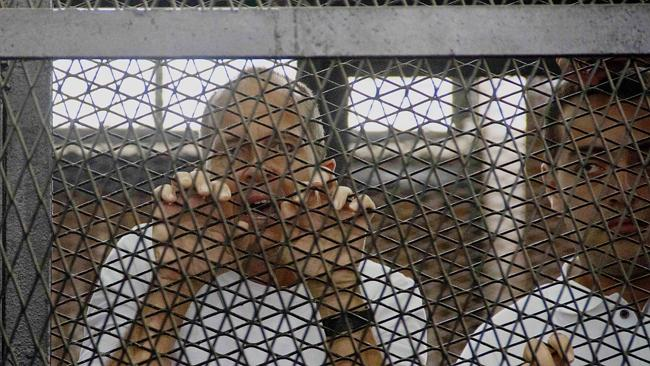 Also Detained ... Al-Jazeera correspondent Peter Greste (left) and producer Baher Mohamed