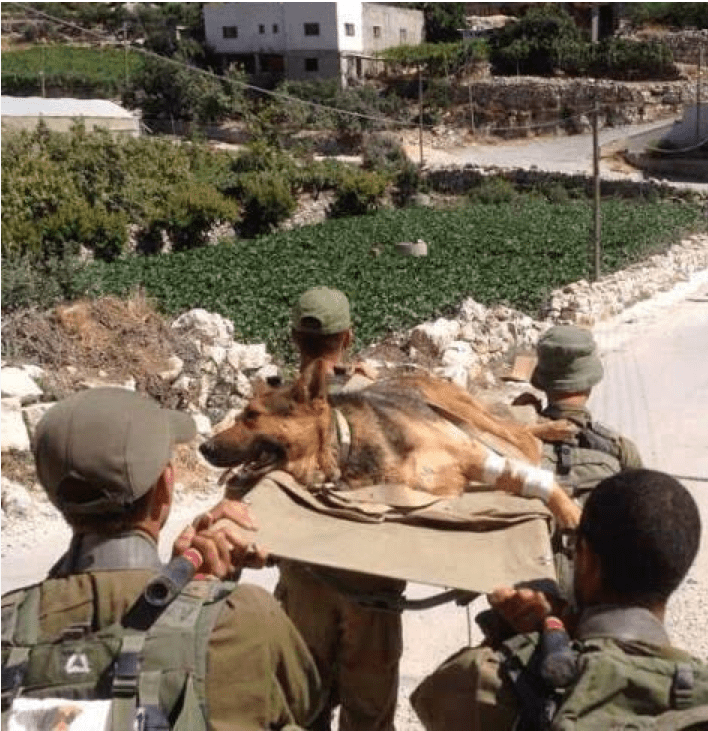Four Israeli soldiers and wounded German Shepherd