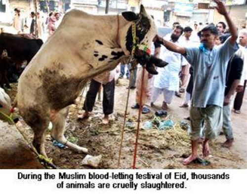 EID-HALAL-Celebrations1