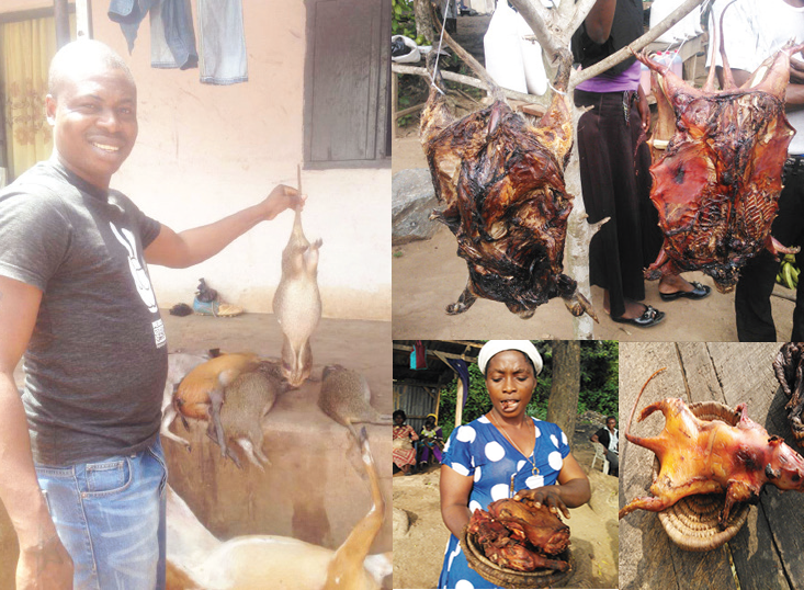 Despite warnings from health officials villagers in West Africa continue to purchase and eat bats, rodents and bush meat.
