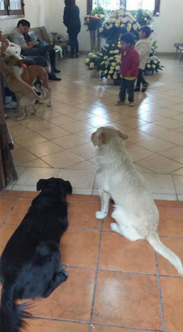 Stray-dogs-attend-funeral-of-lady-that-used-to-feed-them-1