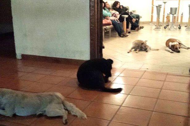Stray-perros-asistir-funeral de-lady-que-usa-to-feed-les-2