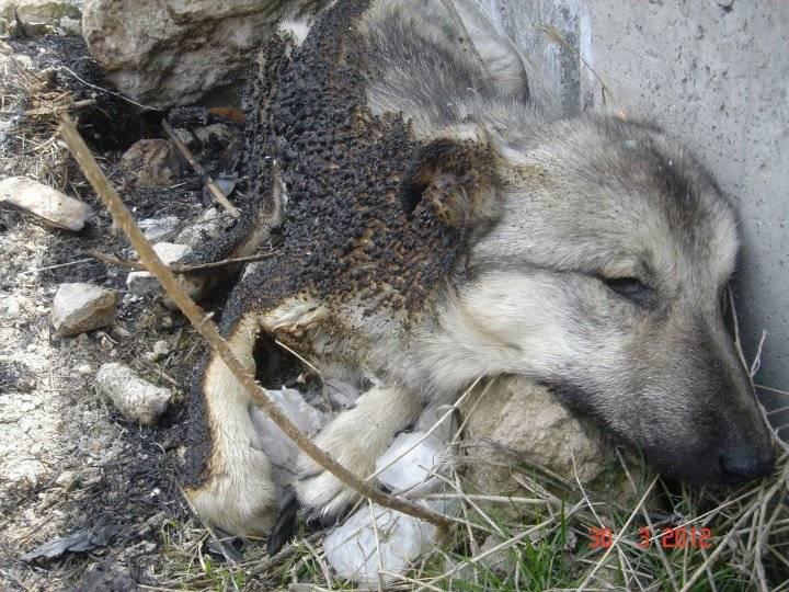 turkey-dog-killings