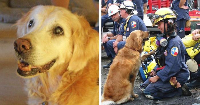 last-9-11-rescue-dog-birthday-party-new-york-bretagne-denise-corliss-fb__700