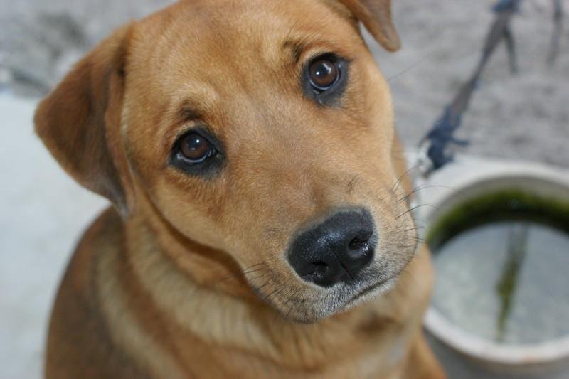 a sad puppy face =(