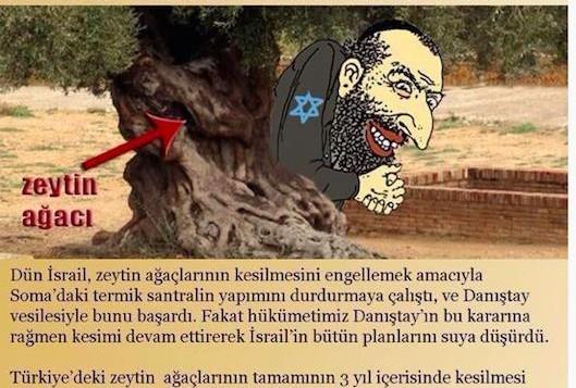 Turkey-Jew-Olive-Tree-529x3571-529x357